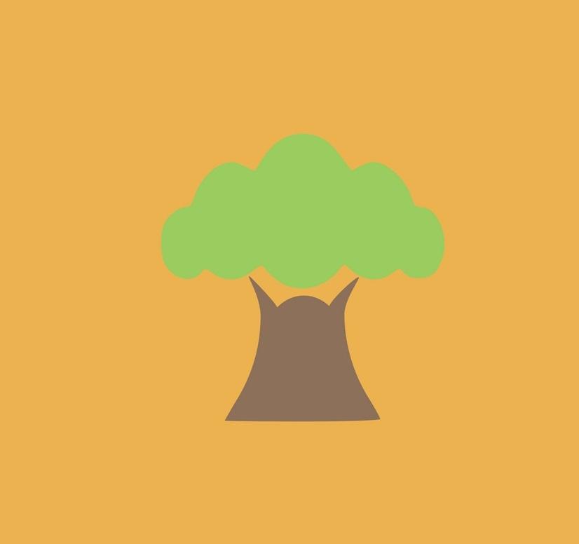 baobab on orange background