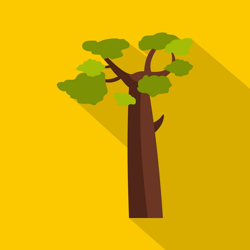 baobab on yellow background