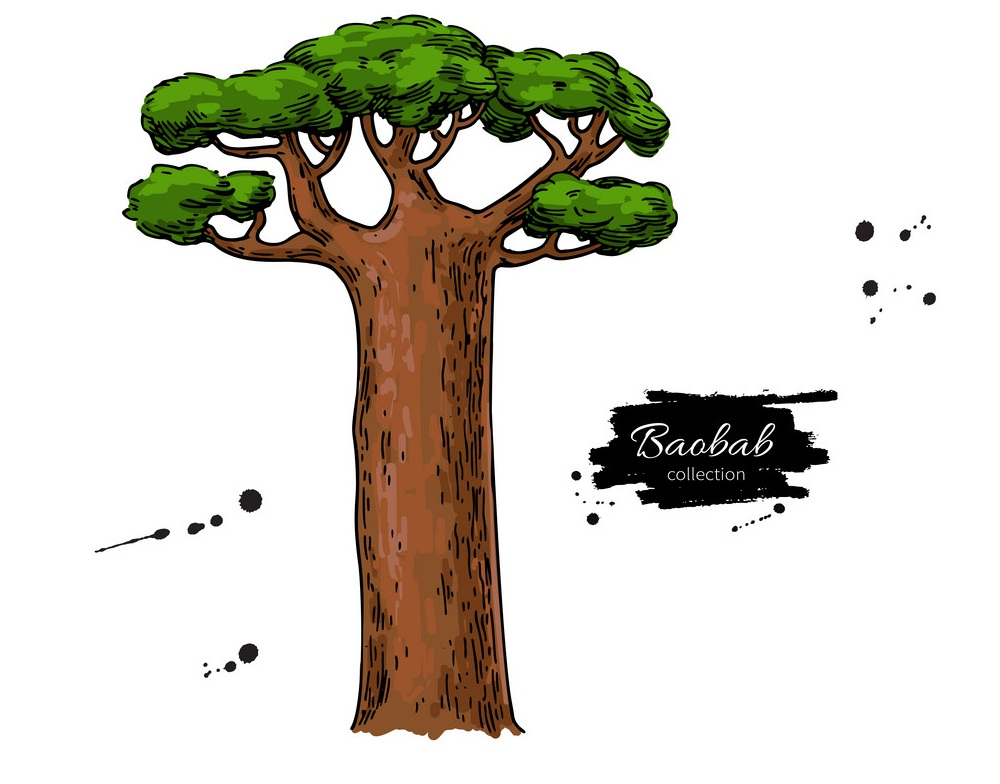 baobab tree drawing