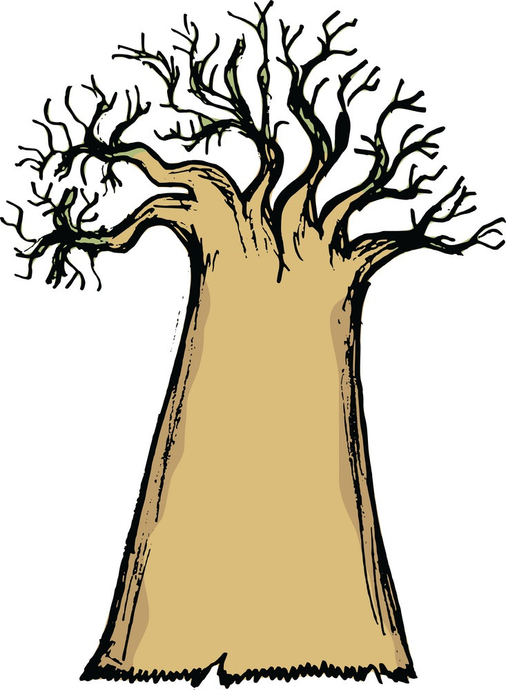 baobab without leaves