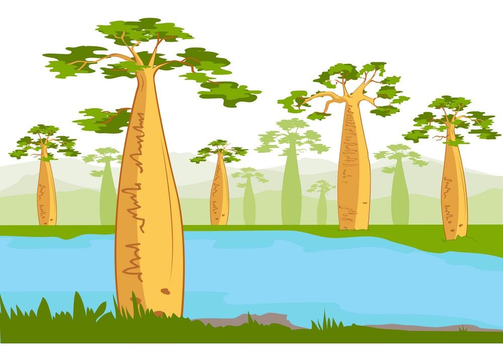 baobabs nea the river