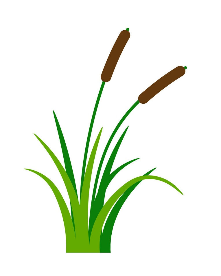 bush bulrush with grass