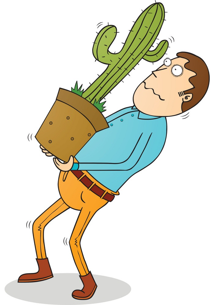 carrying cactus