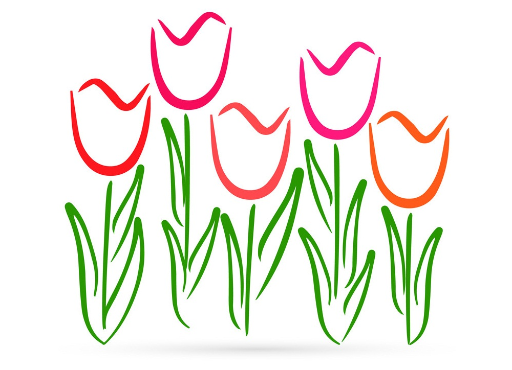 color draw of tulips