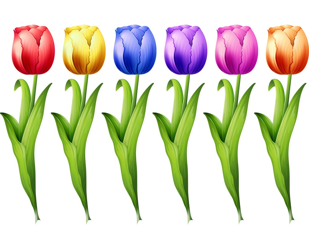 colorful tulip flowers set