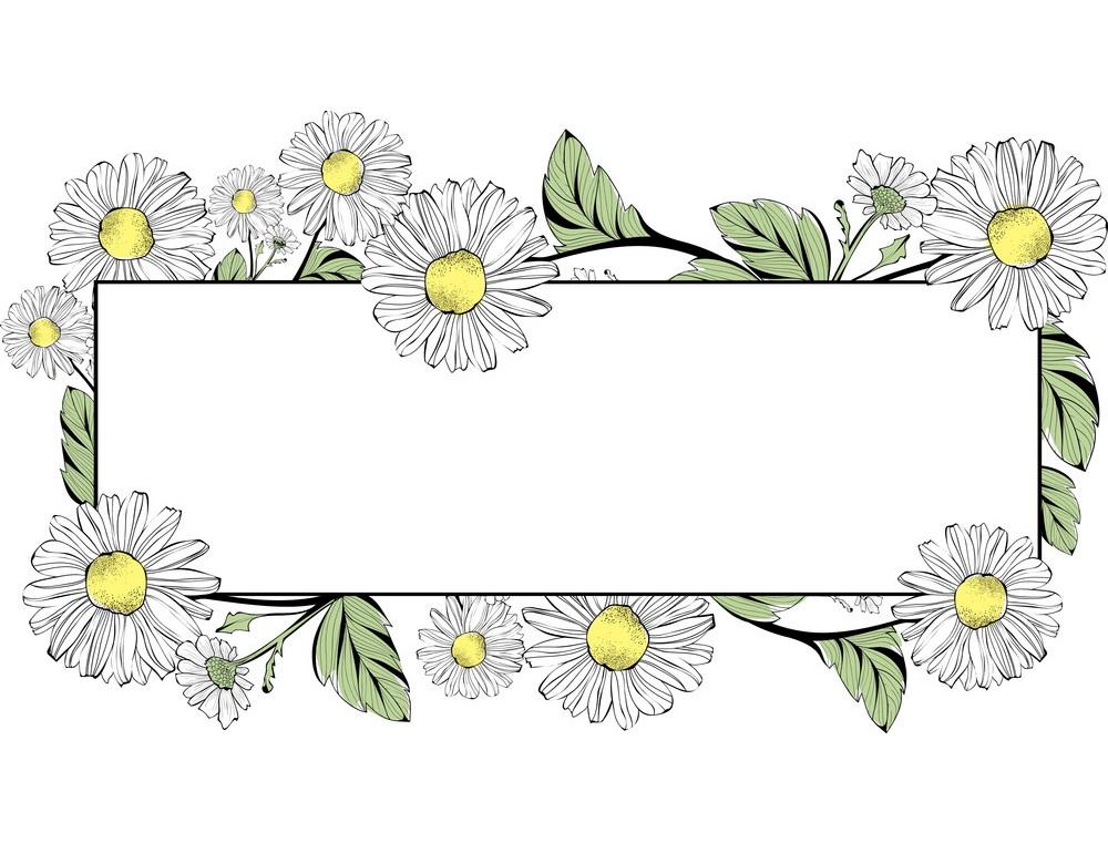 daisy flowers border