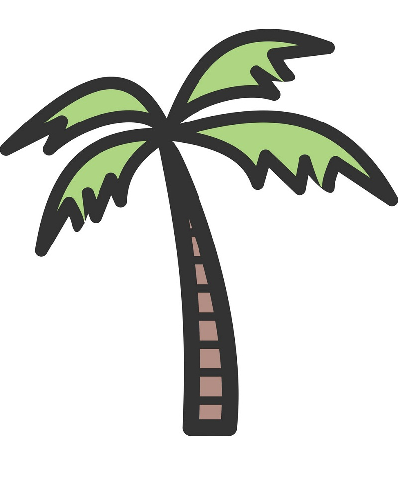 drawing of coconut palm tree