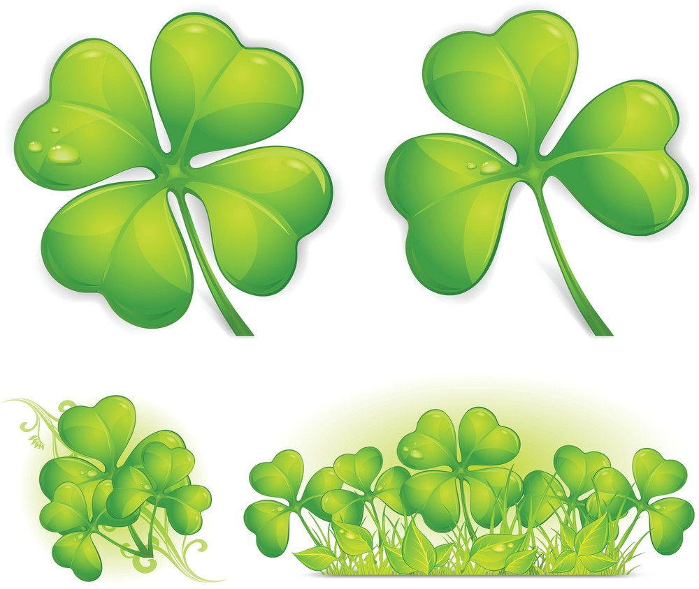 four leaf shamrock 3