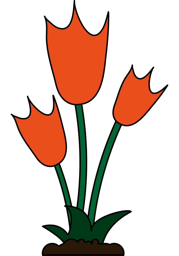 funny orange tulips