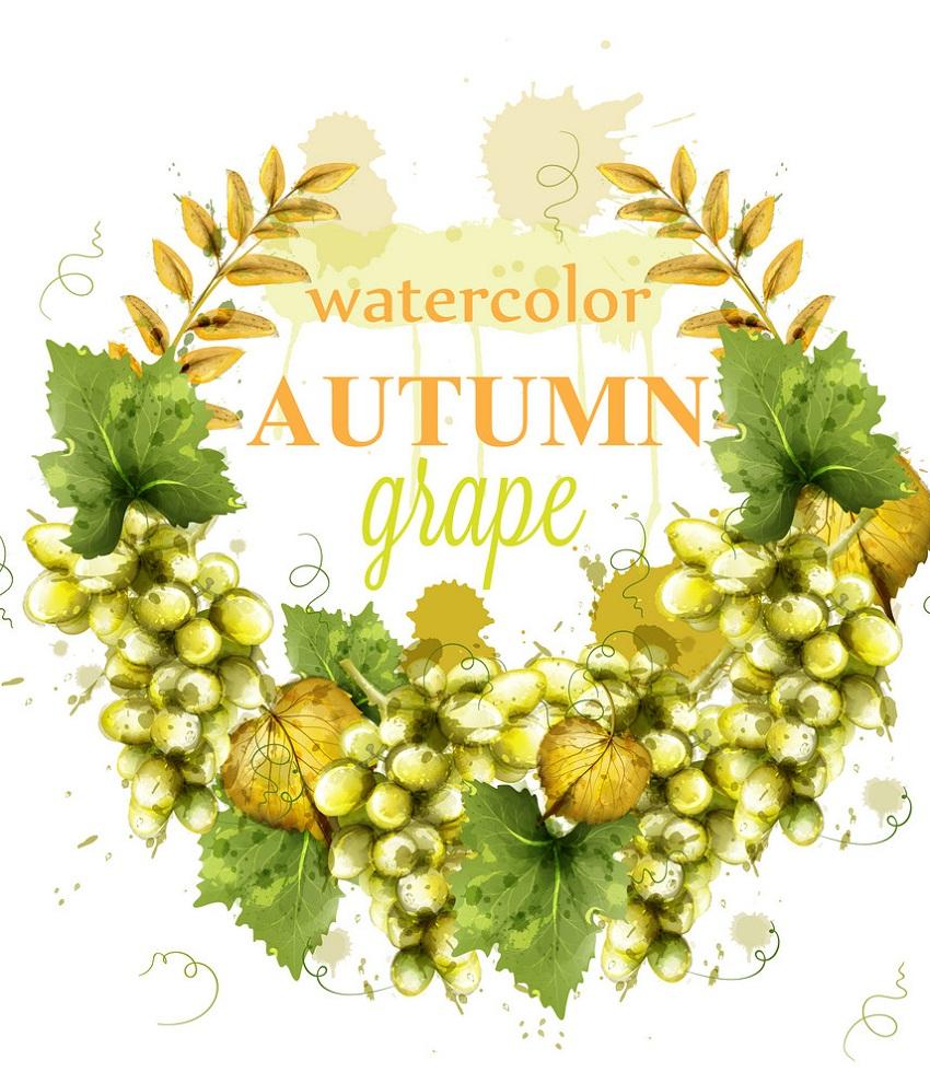 grapes wreath watercolor