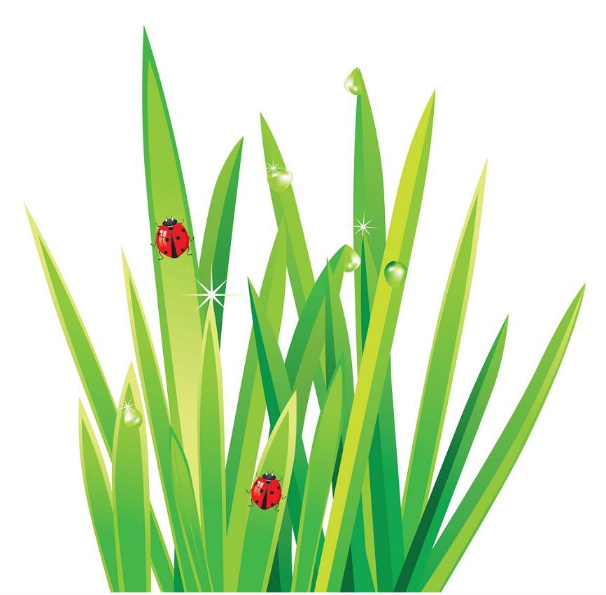 grass and ladybugs