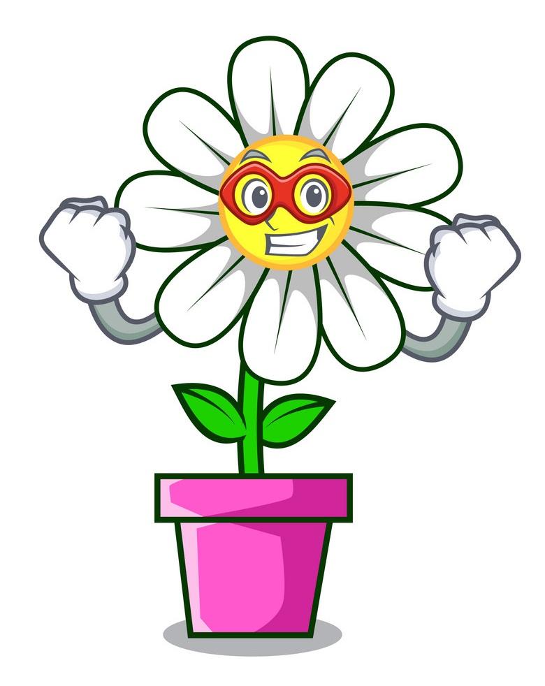 hero daisy