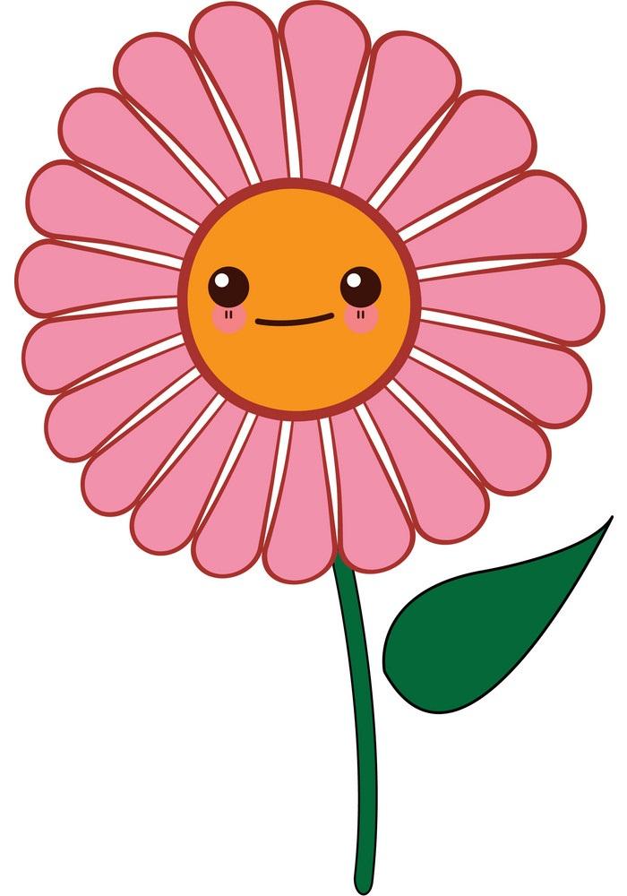 lovely pink daisy