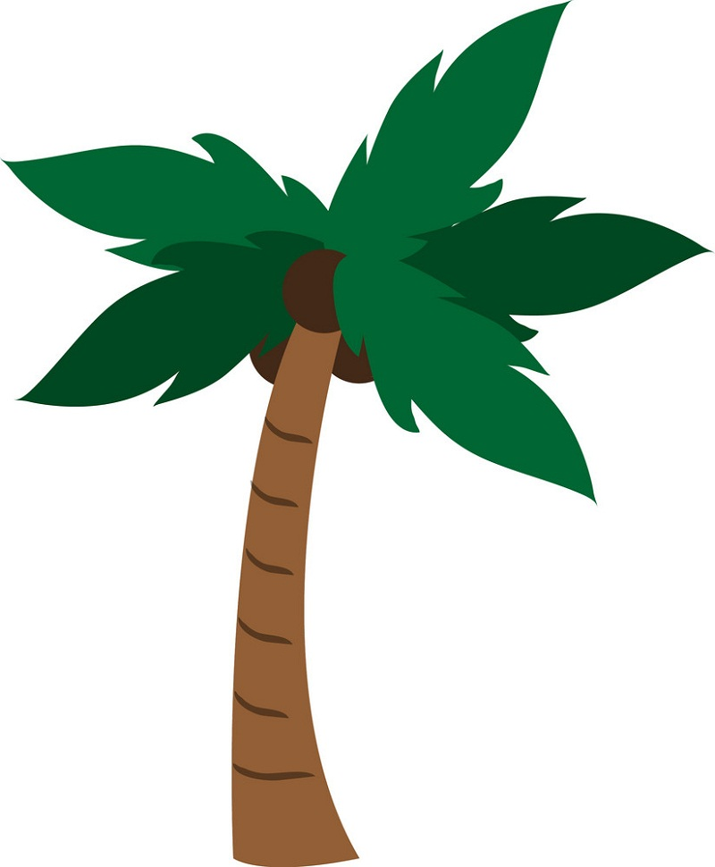 normal coconut palm tree
