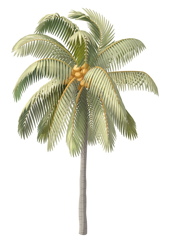old coconut palm tree