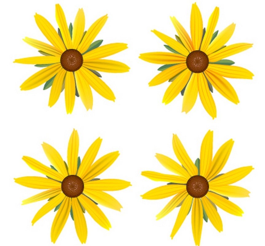 set of yellow daisies