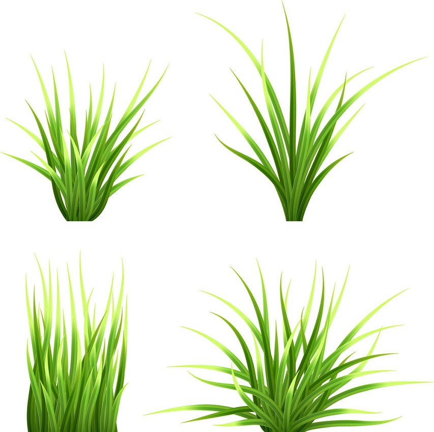 setof realistic grass