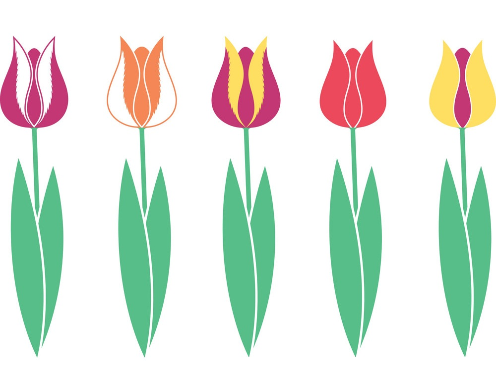 simple colorful tulips set