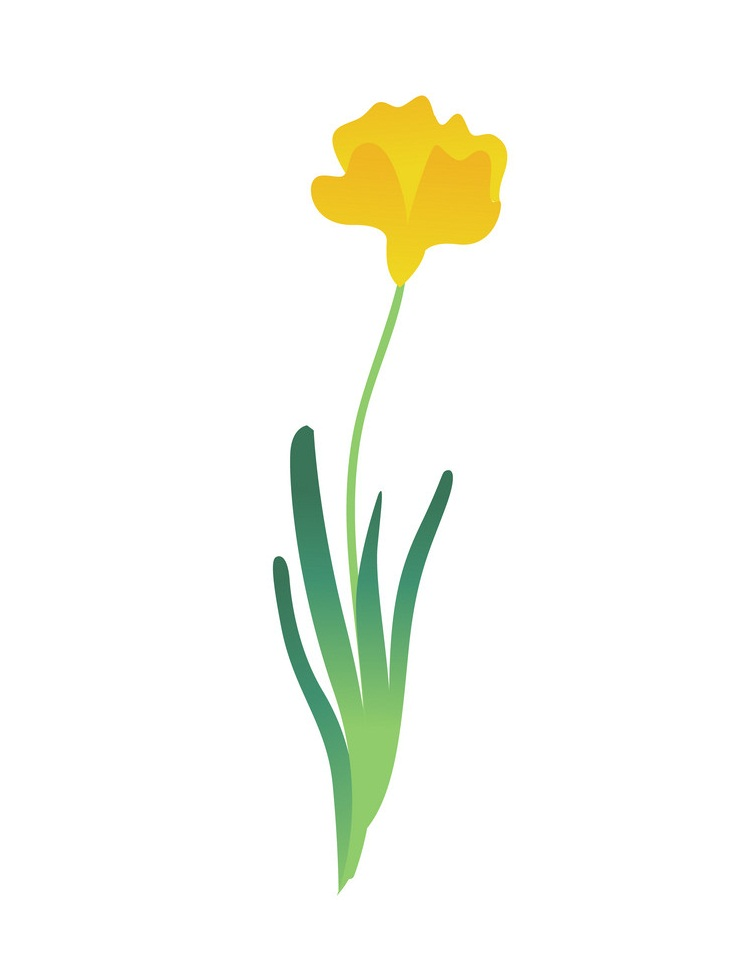 simple yellow tulip