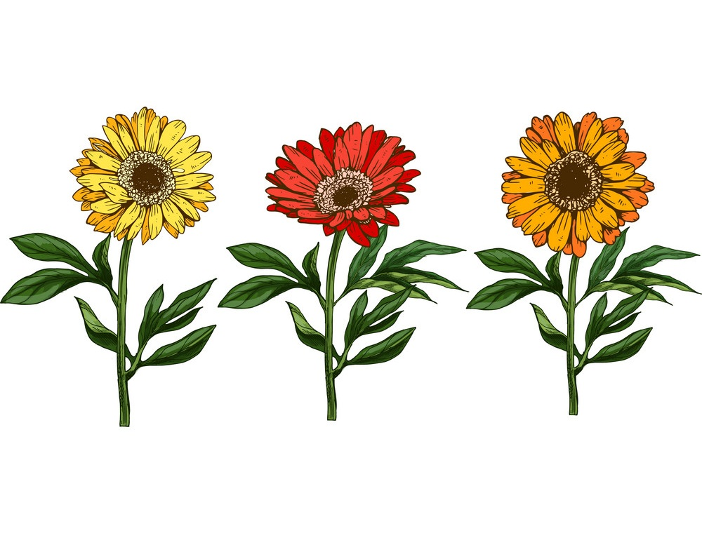 three daisies with different colors