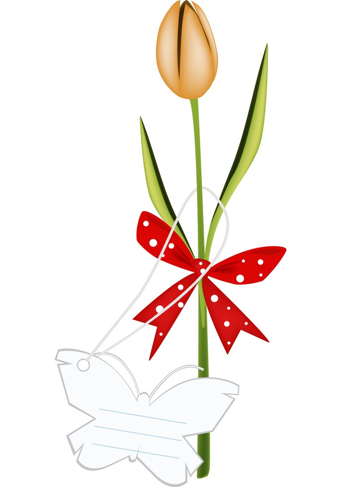 tulip with red ribbon