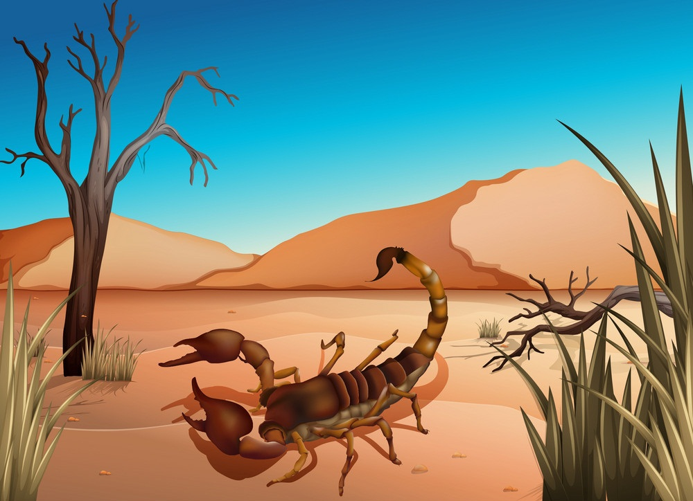 a desert scorpion