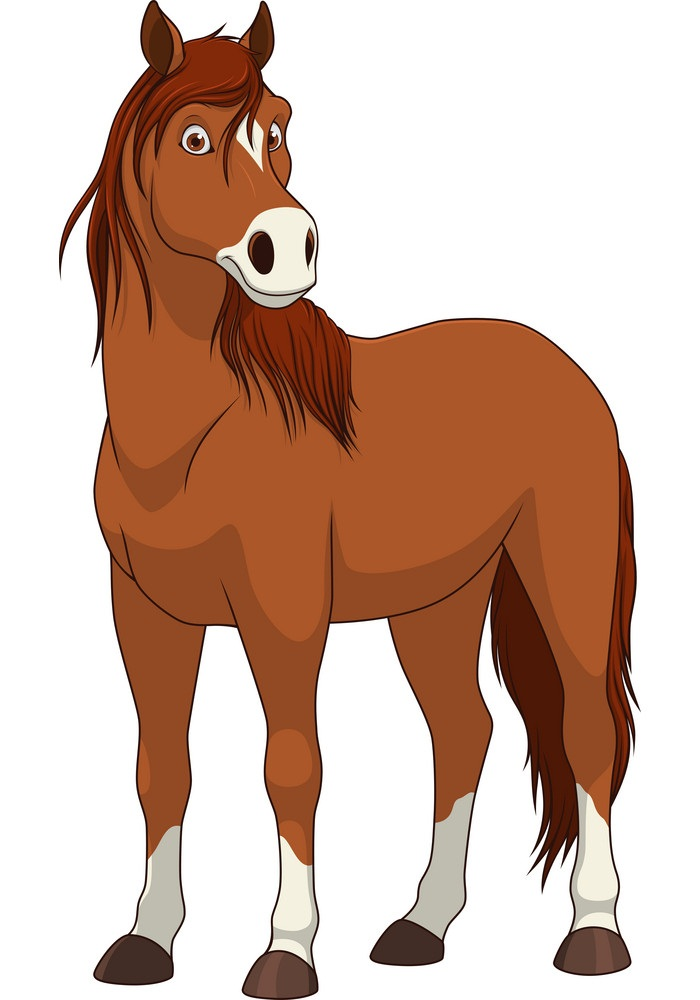 a horse looking