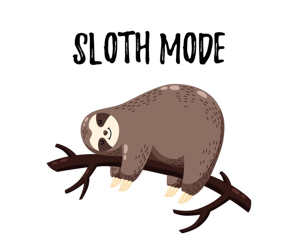 a sleeping sloth