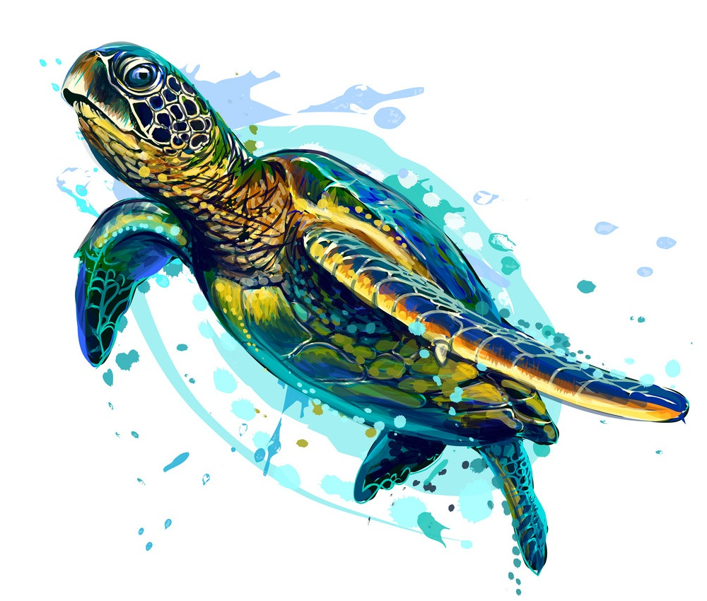 artistic sea turtle