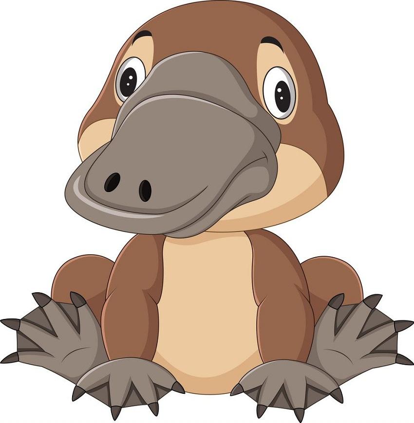 baby platypus sitting