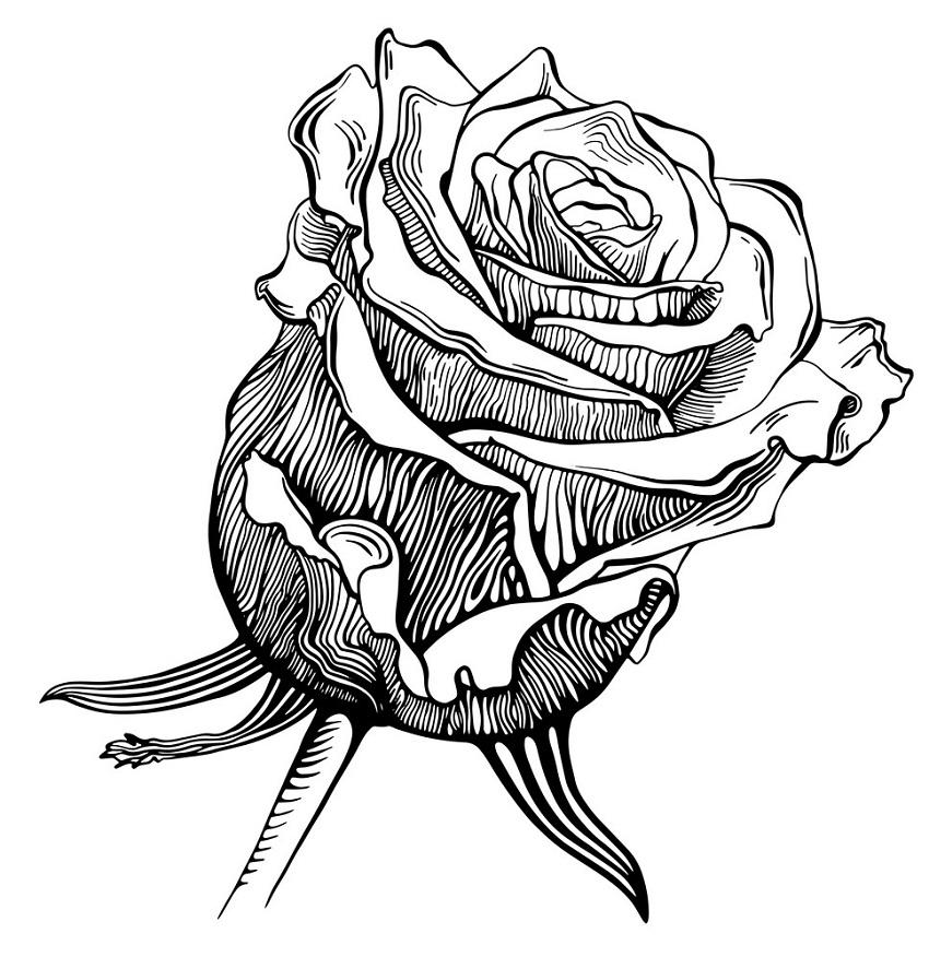 black and white rose outline