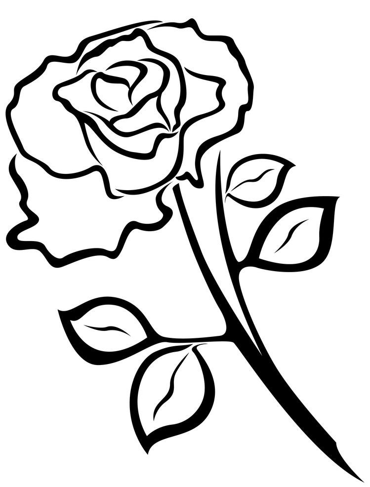 black rose outline