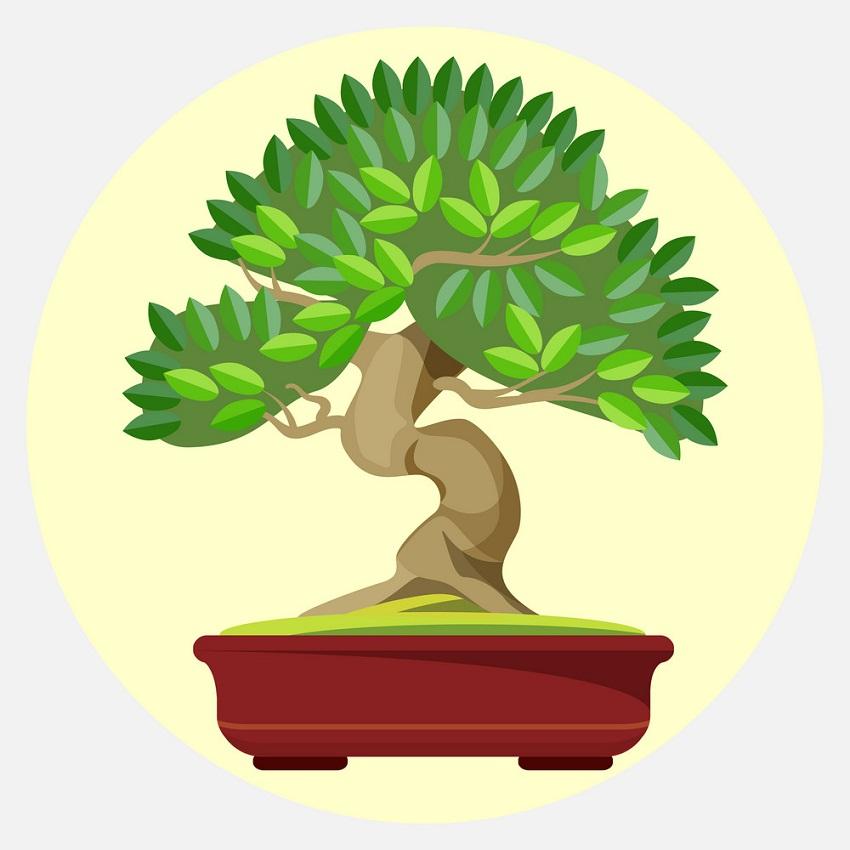 bonsai japanese art