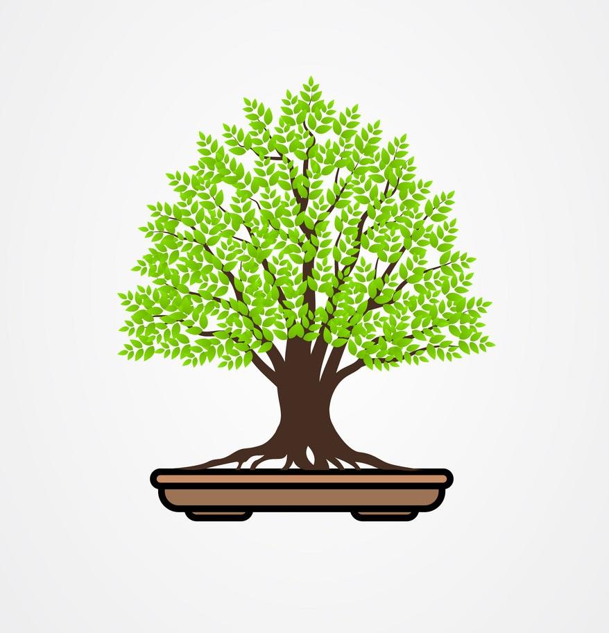 bonsai tree 1