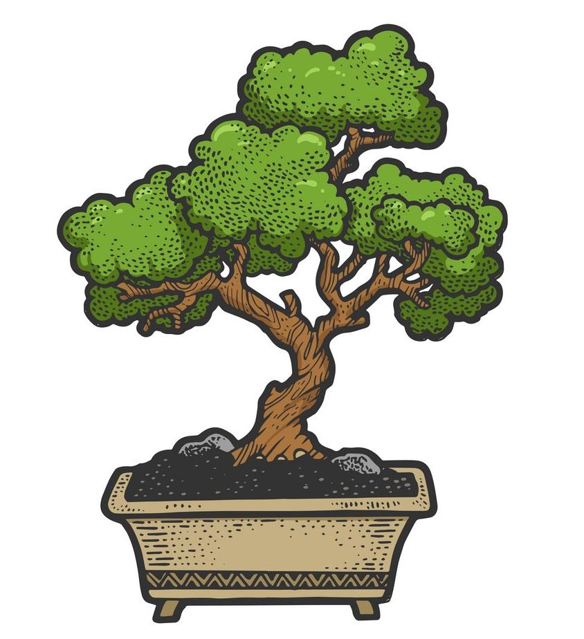 bonsai tree sketch engraving