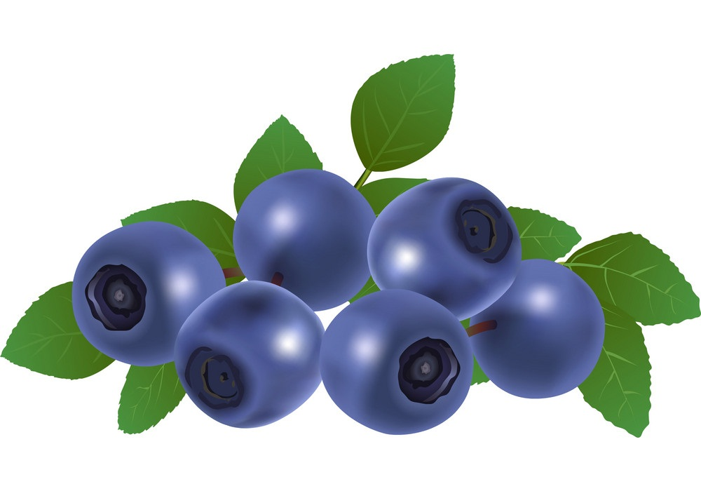 bunch of blueberry