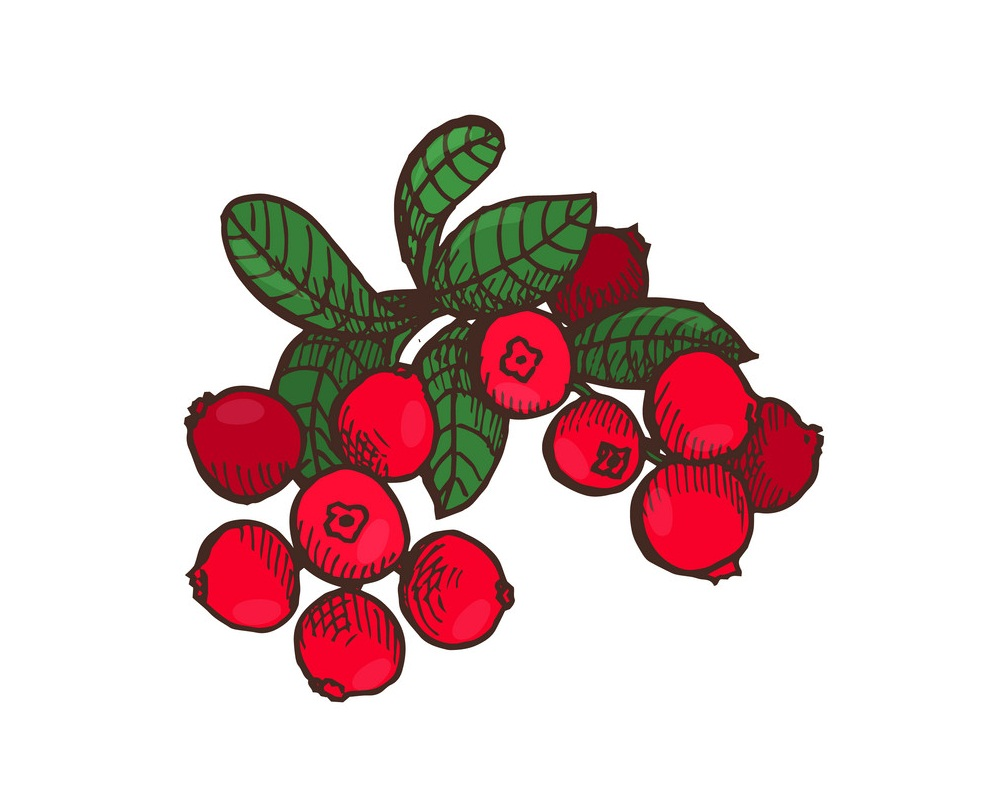 bunch of cranberries with leaves