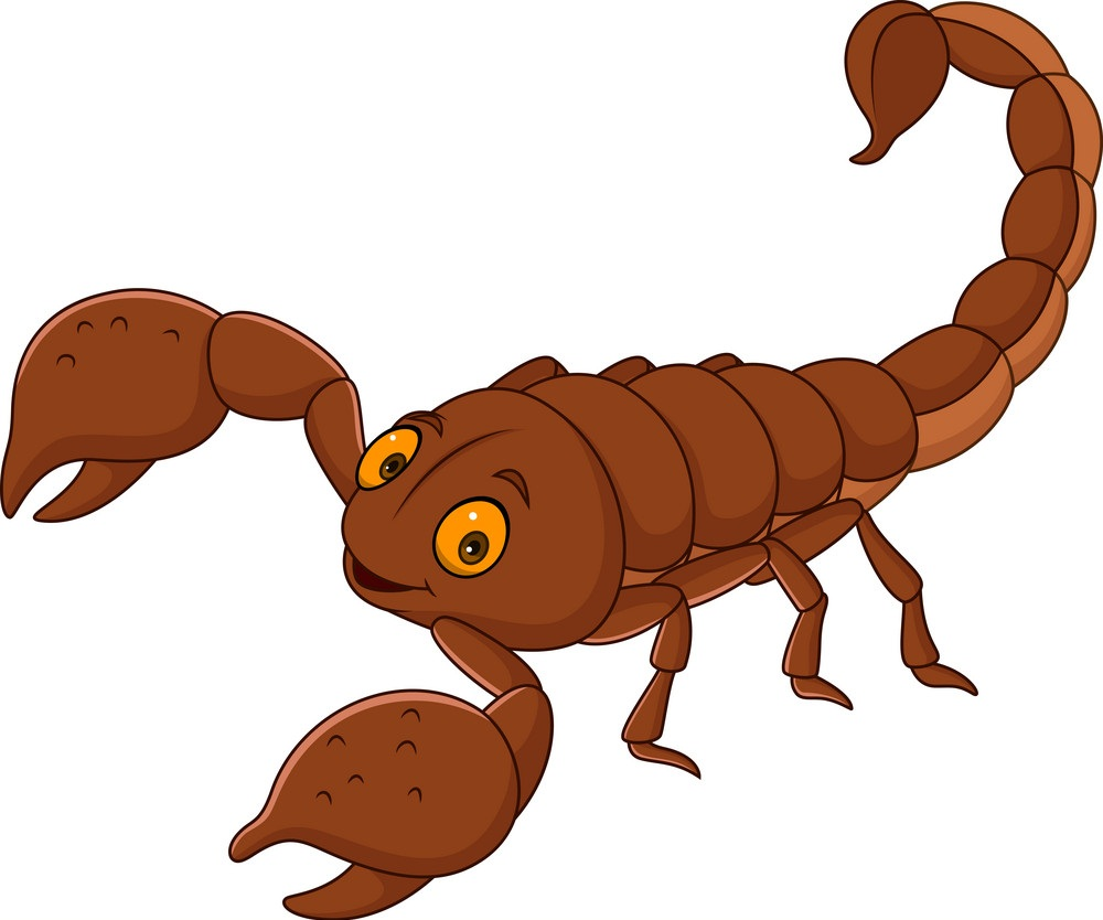 caroon brown scorpion