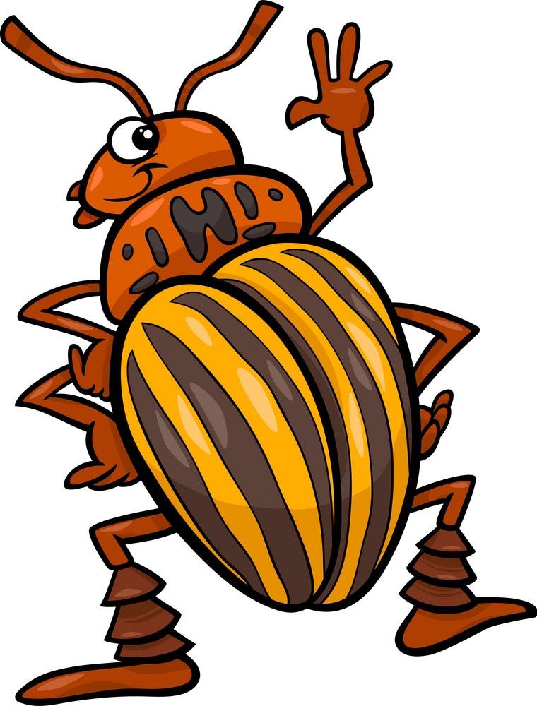 cartoon potato beetle