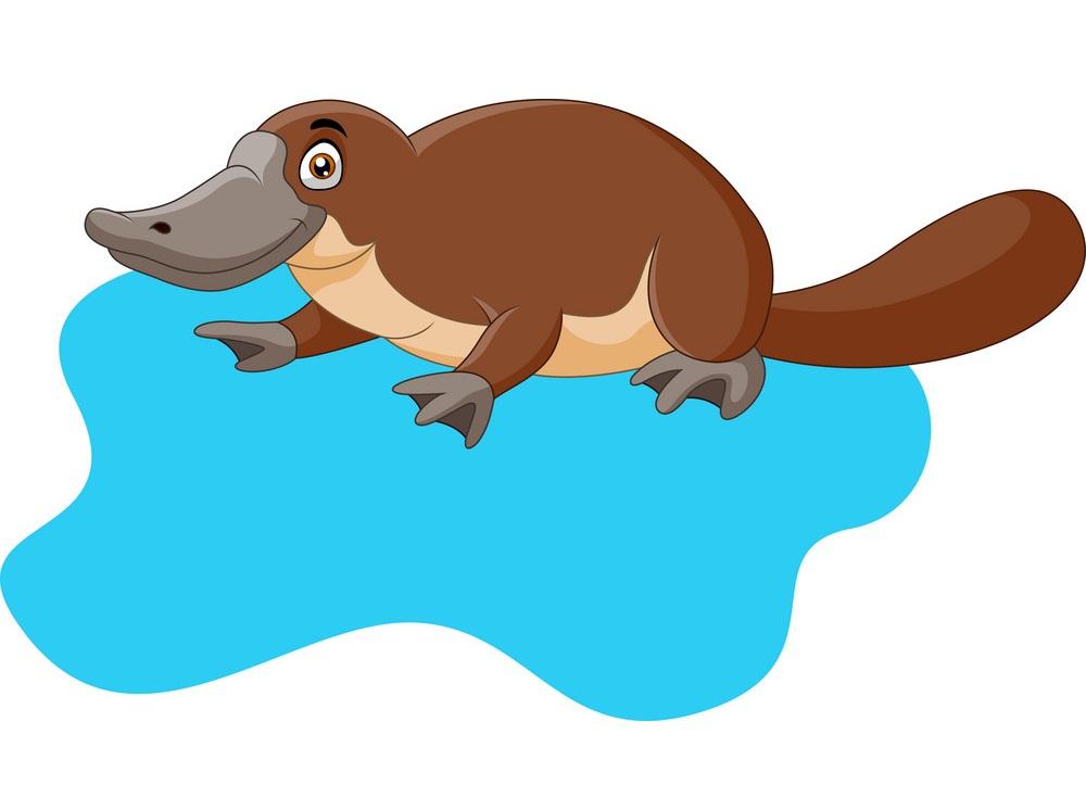 cartpoon platypus on water