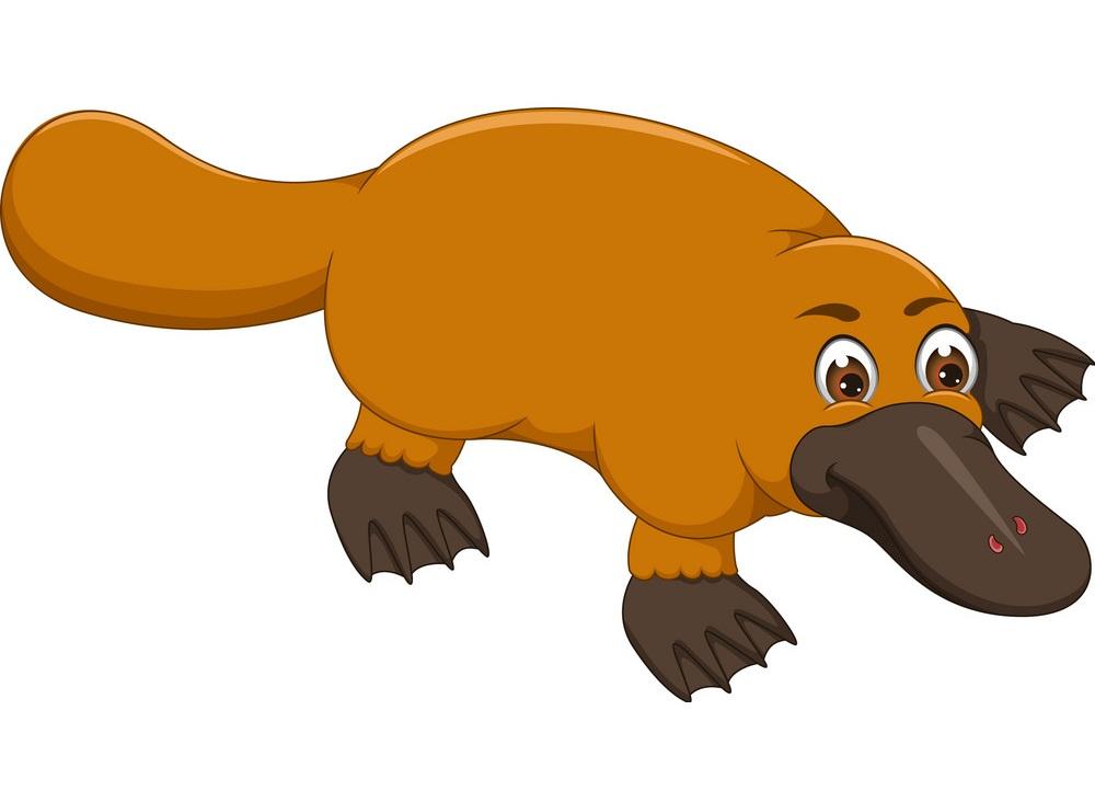 cheerful platypus