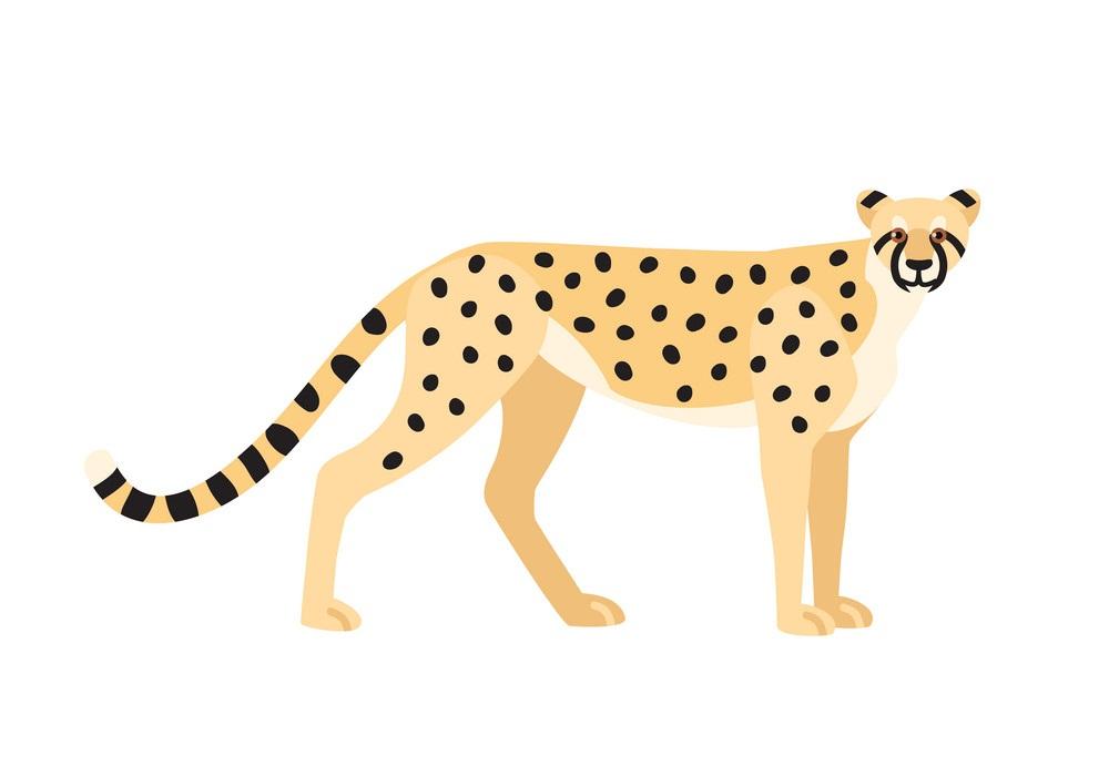 cheetah flat design