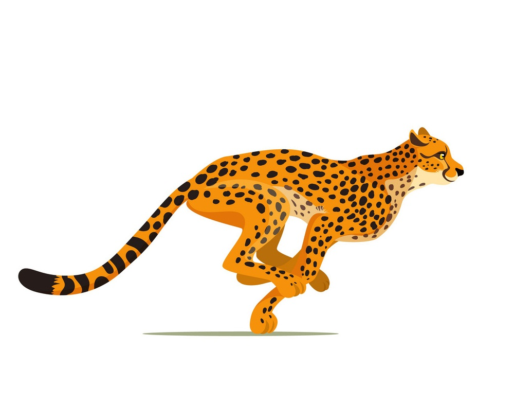 cheetah running 1
