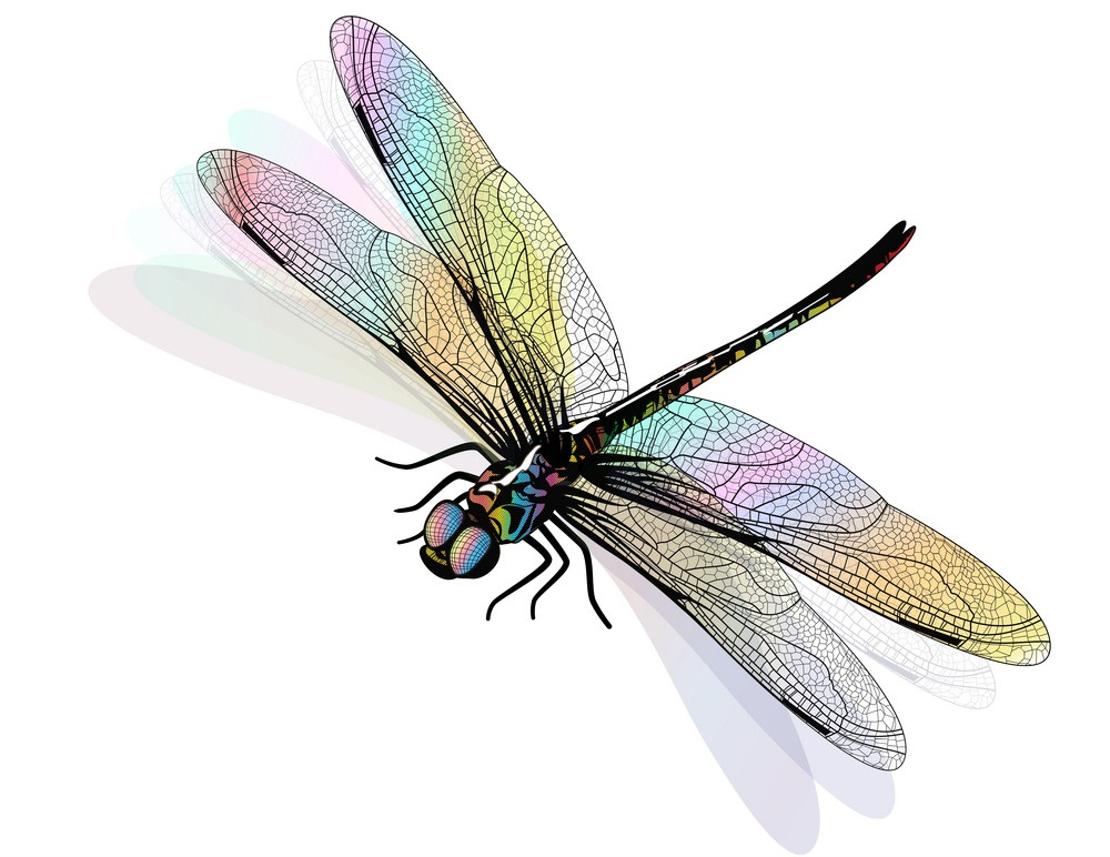 colorful dragonfly