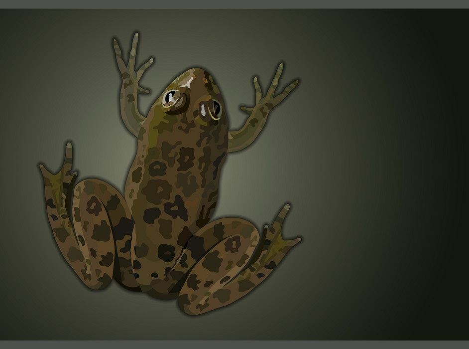 common water frog top view