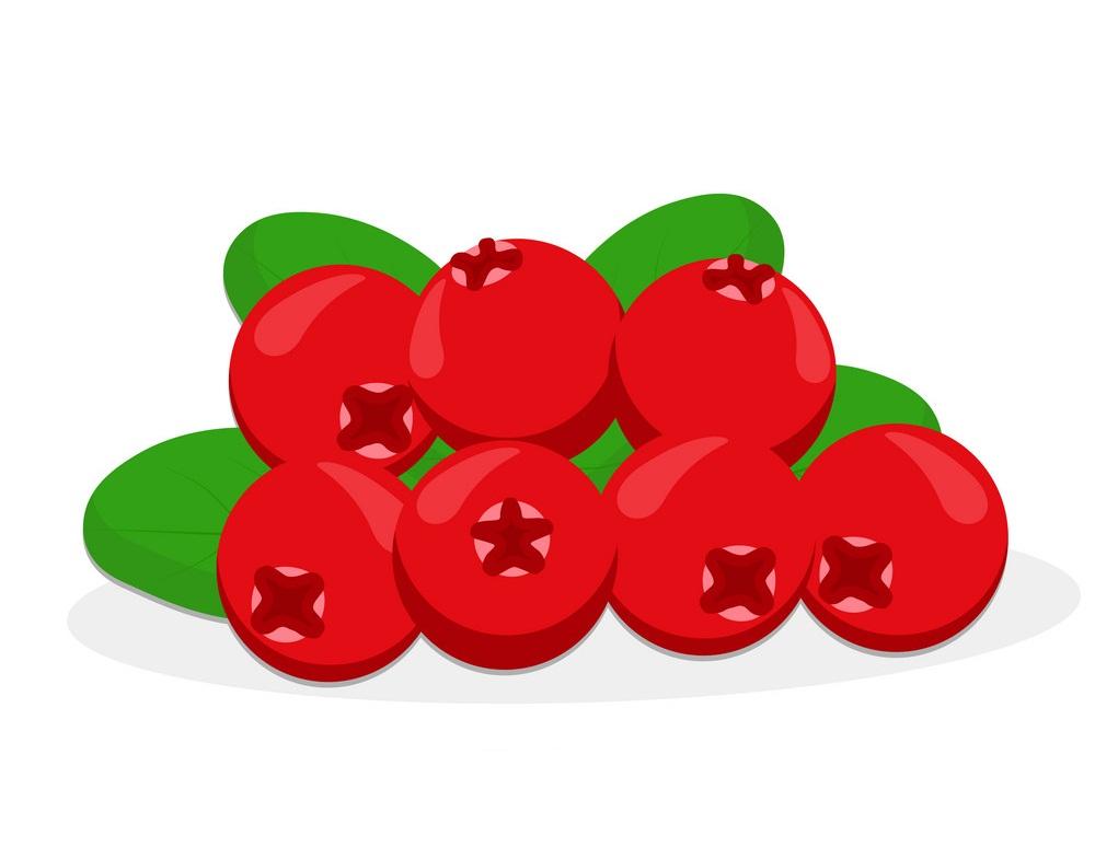 cranberries 2