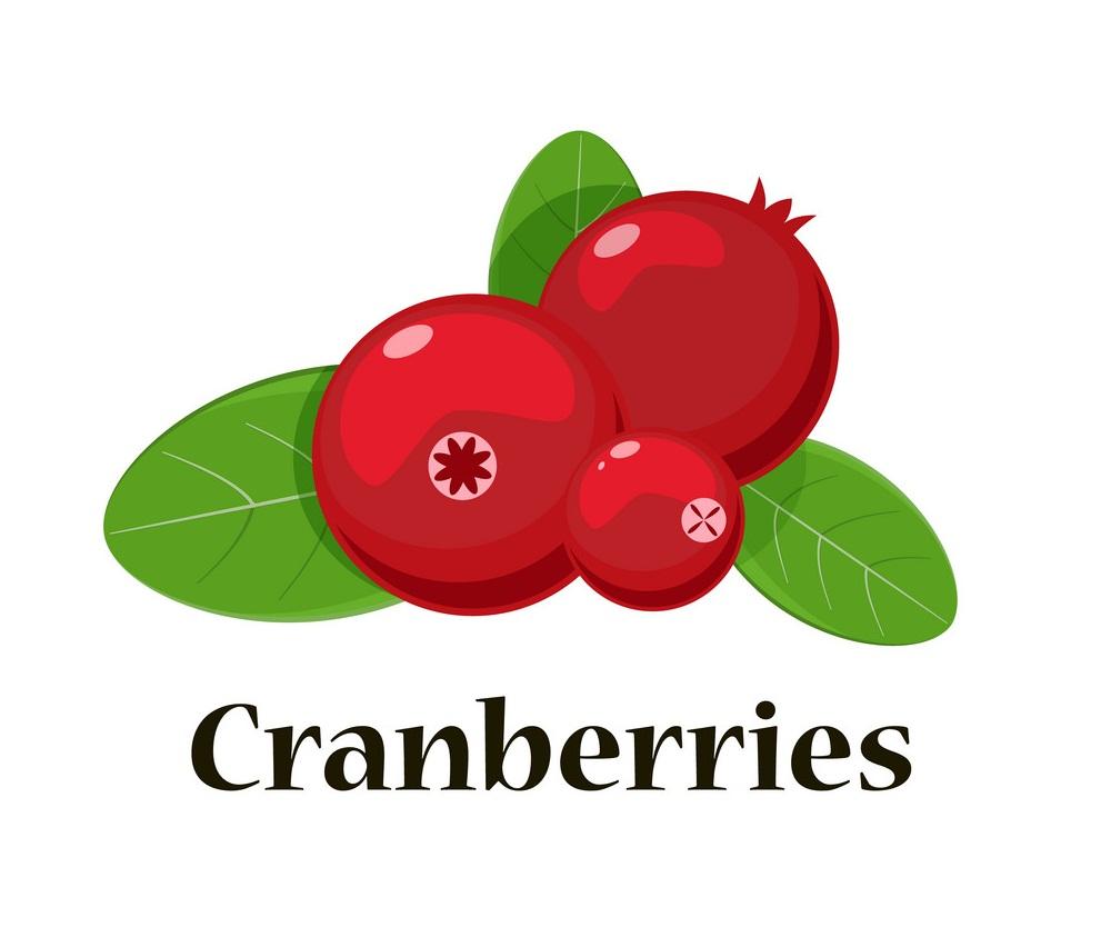 cranberries 4