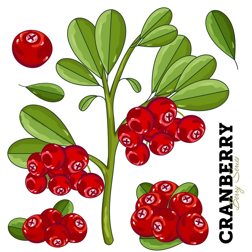 cranberries bunches