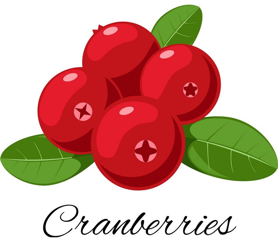 cranberries fruit