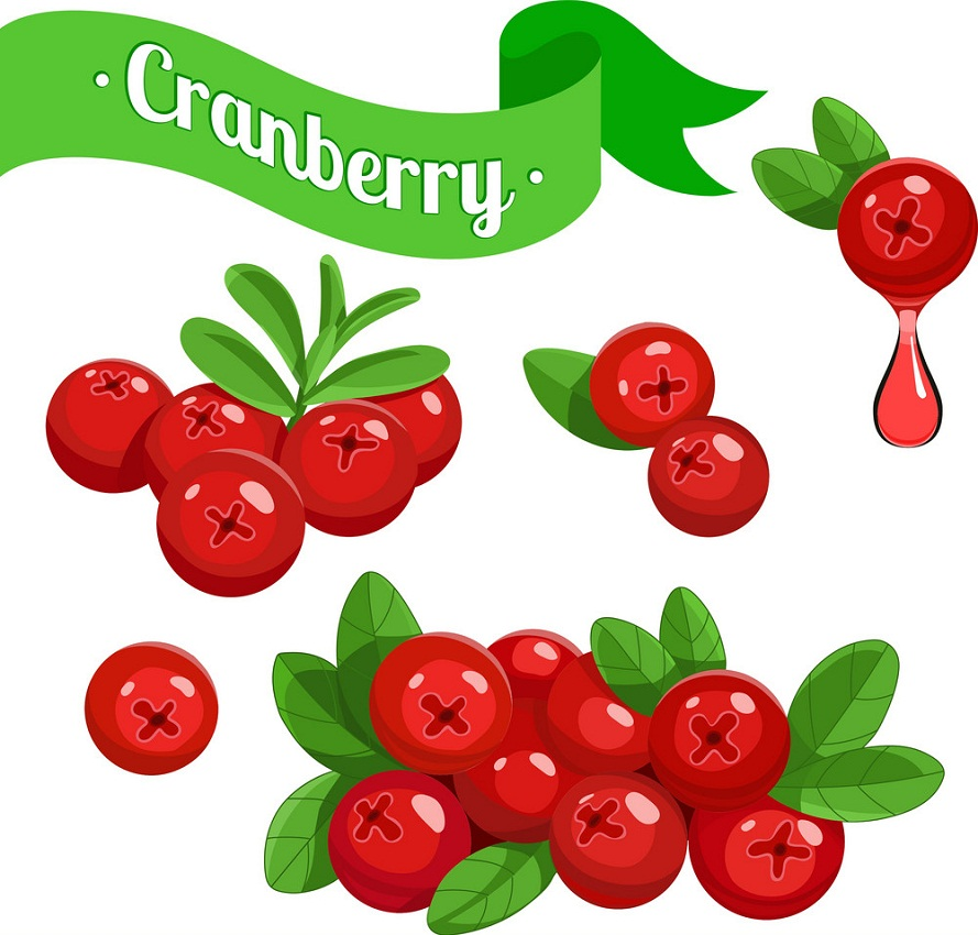 cranberry fruits 1